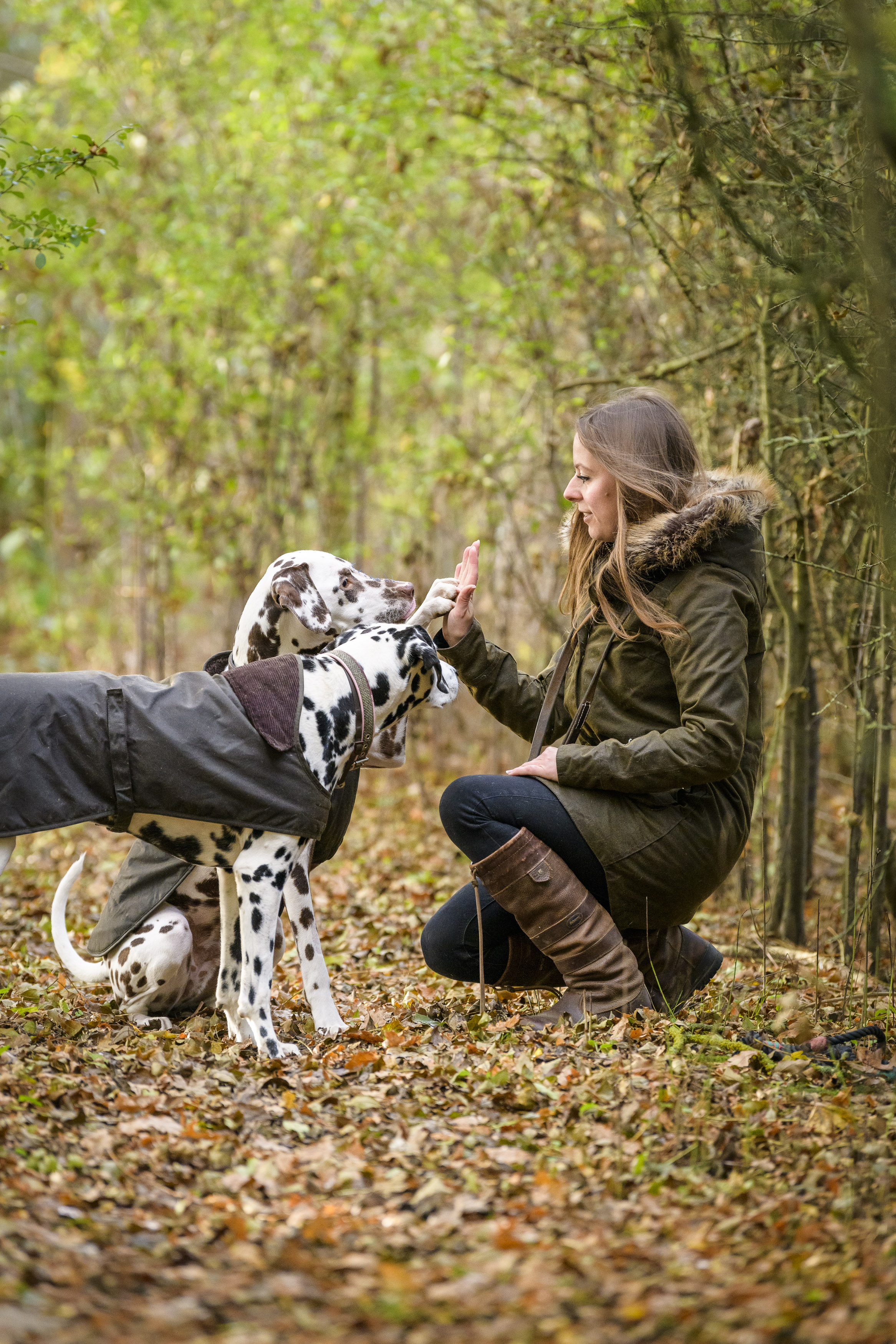 barbour dog walking coat