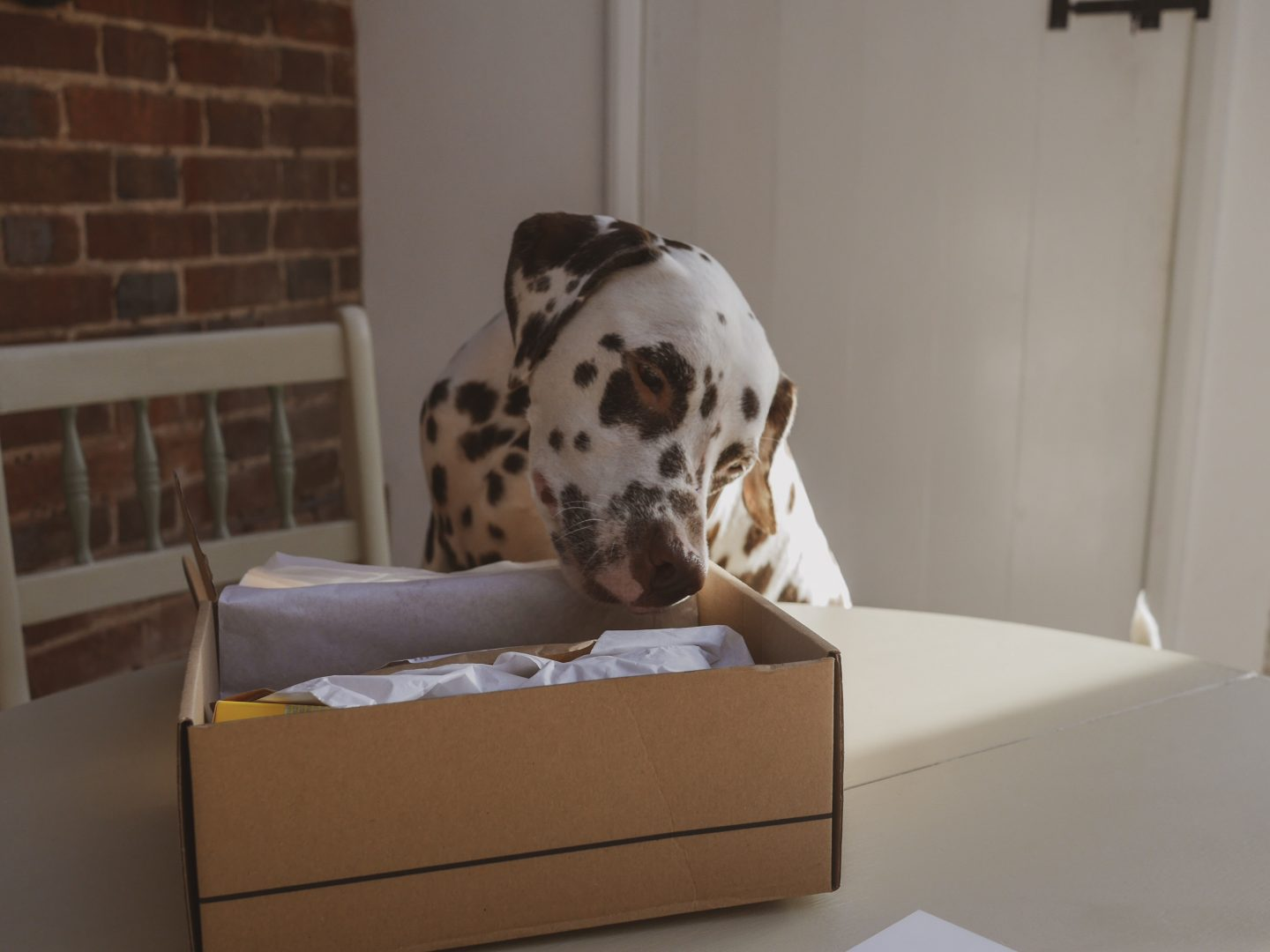 Hounds & Hers – Subscription Boxes for You & Your Dog